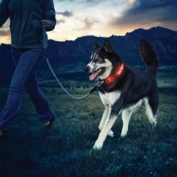 Custom LED dog collar  AbsolutePromo