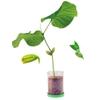 Logo_bean_plant